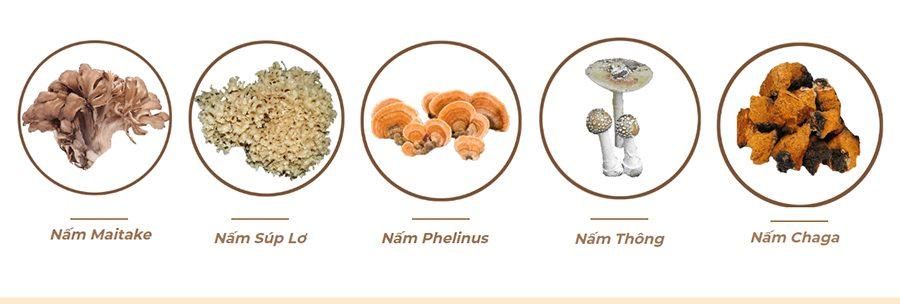 5 loại nấm thảo dược khác được chiết xuất cùng tạo thành thực phẩm chức năng Beta Glucan