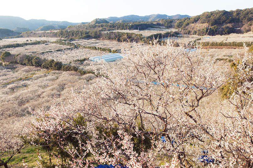 Mơ đầu năm tại Wakayama - Bí quyết sống thọ của người Nhật